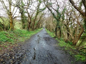 Truro circular walk goes along a former railway route. We started in rain, ended in sun.
