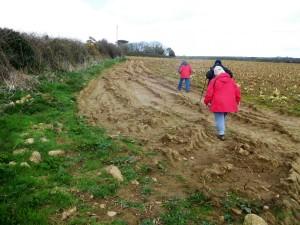 Across a harvested cauliflower field back to Lamorna.