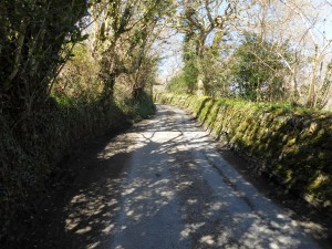An ancient Cornish hedge lines the road we walk to find the step stlle into the woodland.