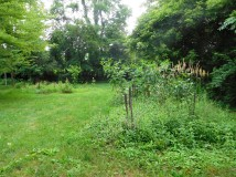 This once tended garden has gone all to seed. What does one make of lush natural growth?