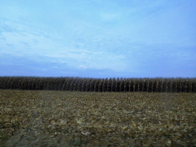 Corn, corn, corn, acres of corn.